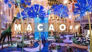 #9 МАКАО Шоу, которое должен видеть каждый Dance Water, отели Wynn Palace и MGM, вкусный ужин
