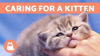 How to CARE for a KITTEN - Food, Education and Health
