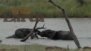 WildEarth - Sunset Safari - 28 February 2020
