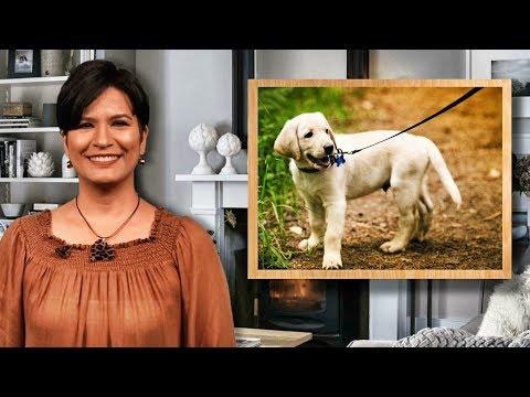 Mantén Tu Casa Ordenada Aún Con Mascotas