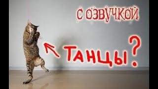 Приколы с котами с ОЗВУЧКОЙ – СМЕШНЫЕ коты и кошки 2018 – Domi Show
