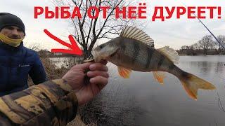Рыбалка в особо крупных размерах наказание