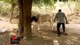 تحميل اغاني برنامج اخطر احمر مع الفنان سامي محمود الجزء 1 MP3