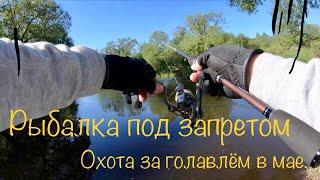 Смоленской обл рыбалка клев
