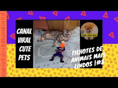 VIRAL CUTE PETS   Videos engraados de animais 2020   Gatos fofos fazendo coisas engraadas   #8