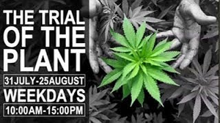 Trial Of The Plant, Day 9 - Dagga Couple - Streamed live from PTA, 11 Aug 2017.