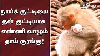 நாய்க் குட்டியை தன் குட்டியாக எண்ணி வாழும் தாய் குரங்கு #Monkey #Dog #ViralVideo #HeartTouchingScene