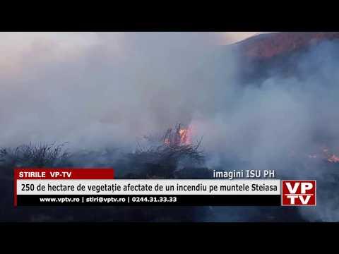 250 de hectare de vegetație afectate de un incendiu pe muntele Steiasa