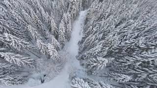 FPV Black Forest Schwarzwald Cinematic FPV