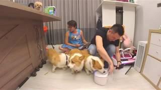 [直播]三寶來喝飲水機~每賣一台,我跟我兄弟就各捐100元給美濃林媽媽狗園