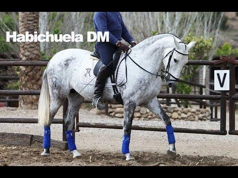 Habichuela DM montada - Abril 2018