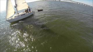 Sailing Drone Video Great South Bay