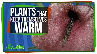 Plants That Keep Themselves Warm