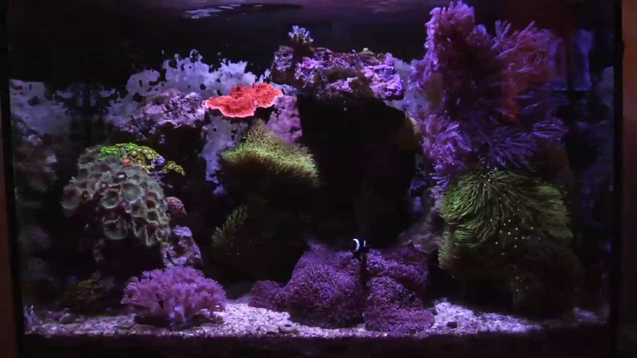 17 Gallon Mixed Reef