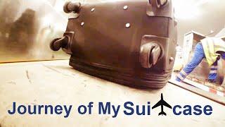 Смотреть онлайн Если кому интересно как путешествует багаж в аэропорту