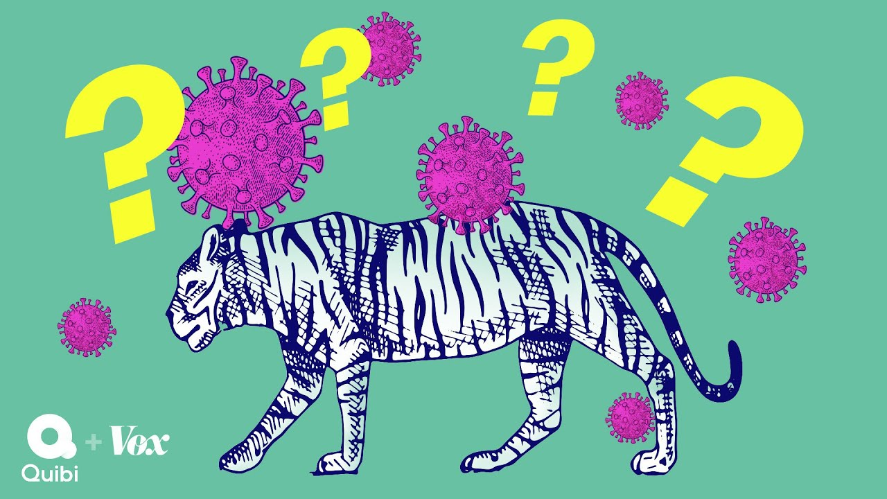Why tigers get coronavirus but your dog will be fine thumbnail