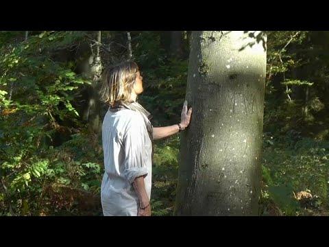 العرب اليوم - شاهد: انتشار العلاج بحمام الغابات في بلجيكا