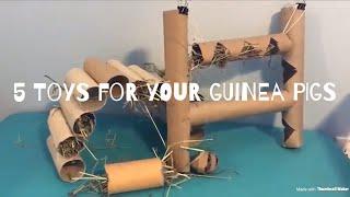 5 Super Easy DIY Guinea Pig Toys