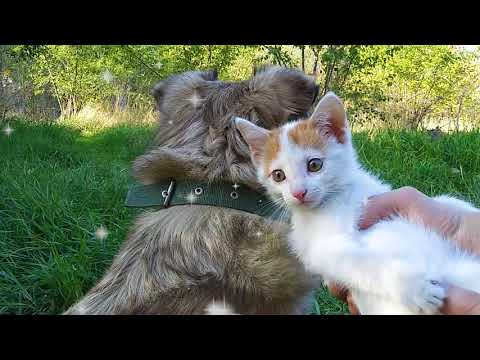 Kitten and Dog Play In Nature