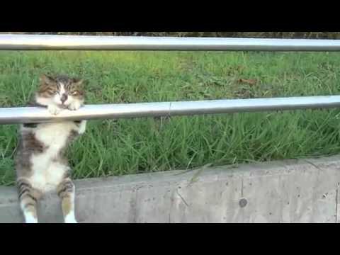 夕暮れの お座り猫ちゃん/ Cat sitting relaxed (видео)