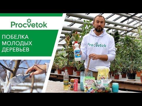 Правильный РЕЦЕПТ ПОБЕЛКИ молодых деревьев осенью!