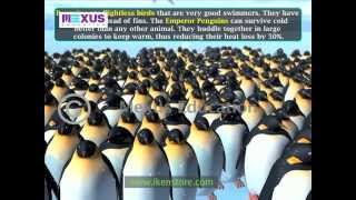Antarctica - Climate, Vegetation, Wildlife and Natural Resources