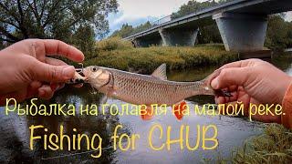 Озеро чепли смоленская область рыбалка 2020