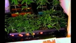 High Times: Sea of Green II *420* How to grow Marijuana