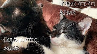 猫のゴロゴロASMR No.1 【My cat is purring ASMR】