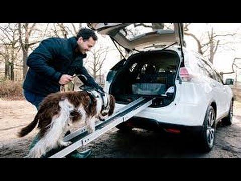 ¡Un coche ideado para llevar perros!