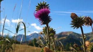 "Peaceful Music, Relaxing Music, Instrumental Music ""Utah Mountain Journey"" by Tim Janis"