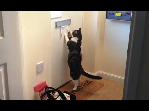Katze vs. Postbote