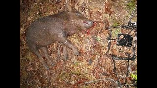 Pro hunter fisher приманка на кабана в спб