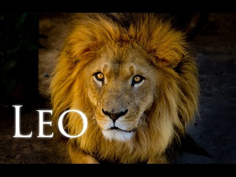 All About Leo with Michele Knight
