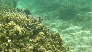 preview picture of video 'Les poissons du lagon - La Reunions - Hermitage les Bains'