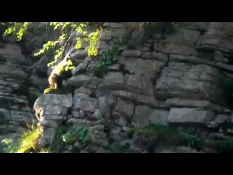 Μία αρκούδα στην Πίνδο [video]