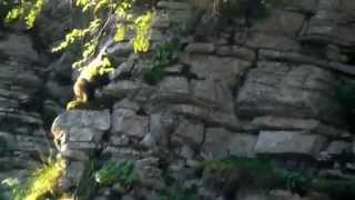 Καφέ αρκούδα στο Εθνικό Πάρκο Β. Πίνδου (Brown bear in Pindos National Park)