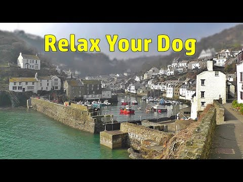 Relax Your Dog TV : TV For Dogs - Beautiful Seaside Sounds And Scenes