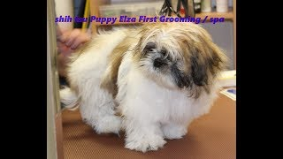 First Grooming   Cute Puppy For The First Time  Puppy Care