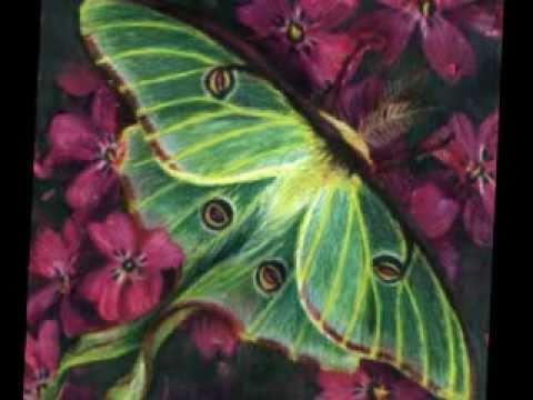 Relaxing Music - Luna Moth