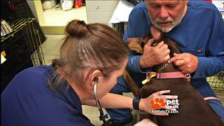 Meet the heroes, reuniting pets with disaster victims