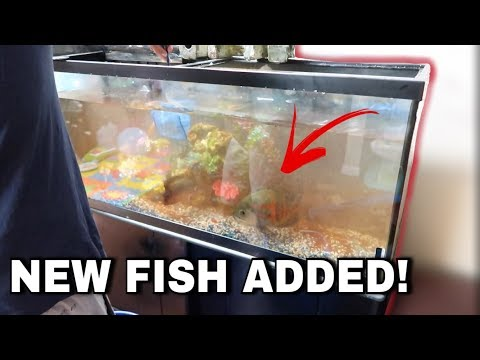 Buying a New Fish!!