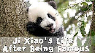 Ji Xiao's Life After Being Famous | iPanda