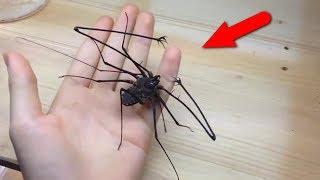 Смотреть онлайн Этих насекомых не хочется видеть в жизни