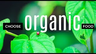 Eating Organic: Why Your Health Will Soar Without The Toxic Crap