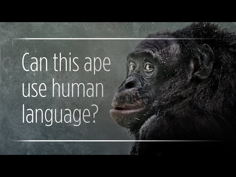 """Can Apes Really """"Talk"""" To Humans?"""