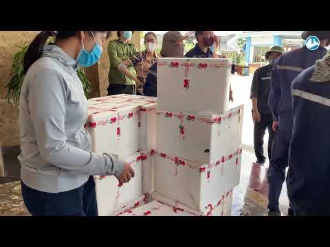 Công ty Than Hạ Long hỗ trợ bà con Bắc Giang tiêu thụ gần 8 tấn vải thiều