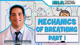 Respiratory | Mechanics of Breathing: Pressure Changes | Part 1