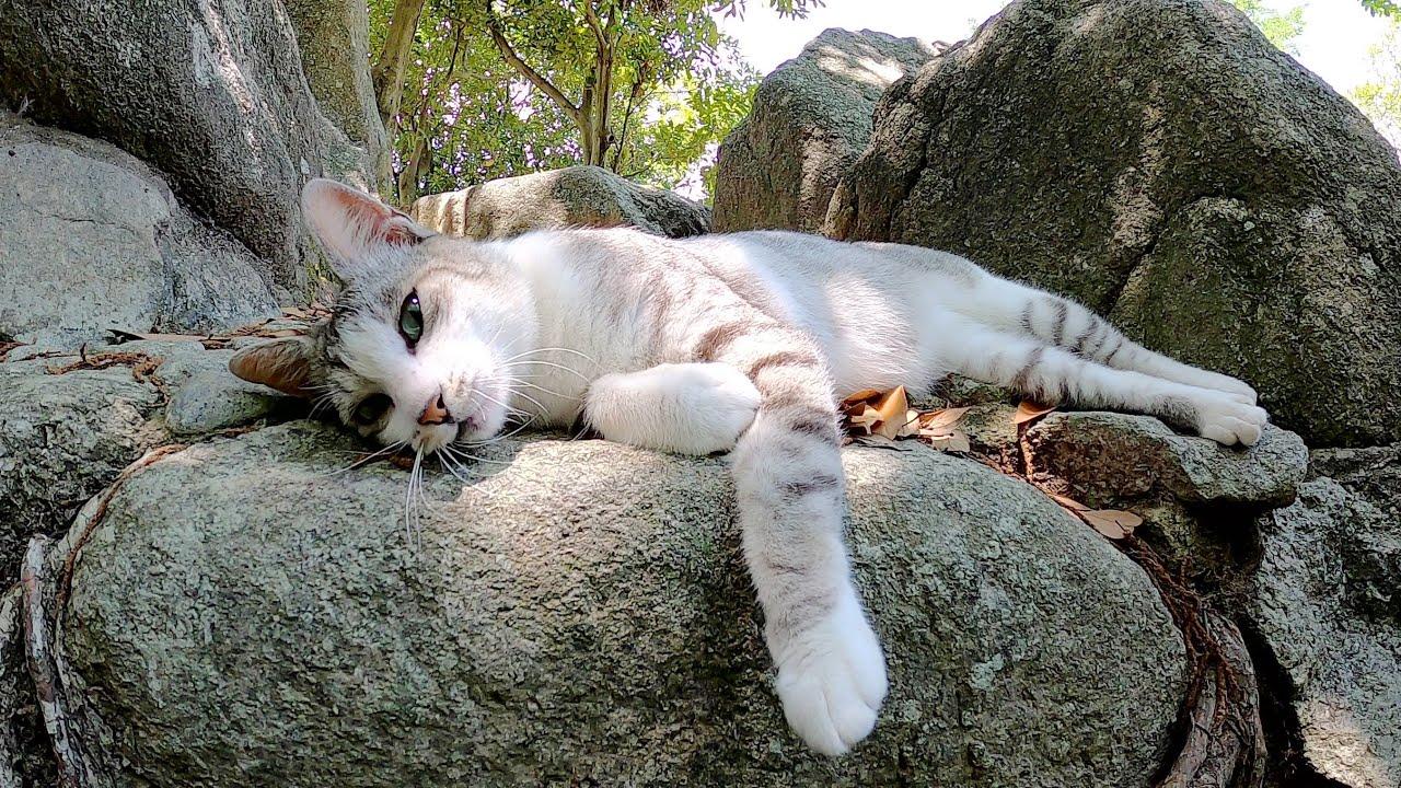 美しいサバシロ猫が涼しい場所へ案内してくれた