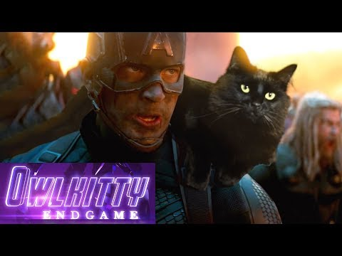 A YouTuber edits his cat inside movies. Here's the video for Avengers : Endgame